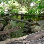 pond-fp-1-jpg