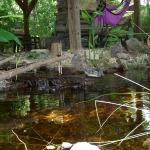 pond-fp-2-jpg